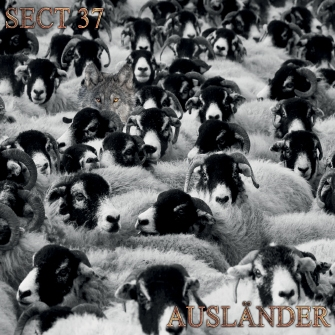 Section 37 - Auslander (Album Cover)